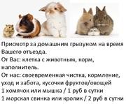 Передержка домашних грызунов